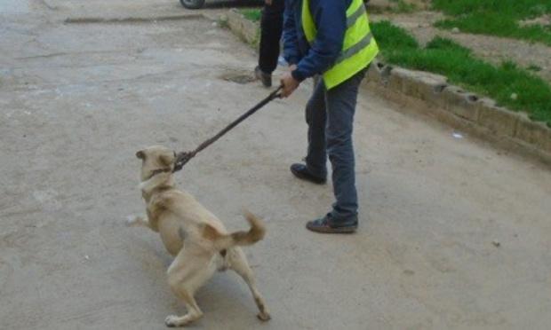 Stop Galoufa (chasse barbare des animaux) en Algérie !
