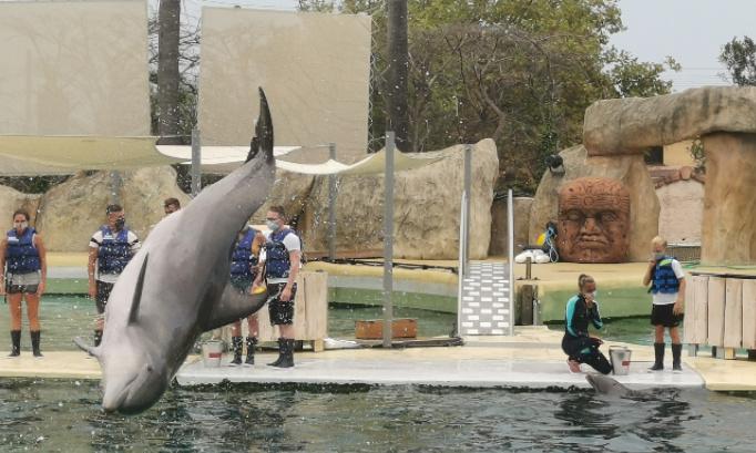 Non à la fermeture définitive de tous les delphinariums