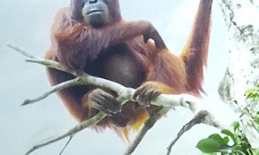 Pétition : Stop à la consommation d'huile de palme !