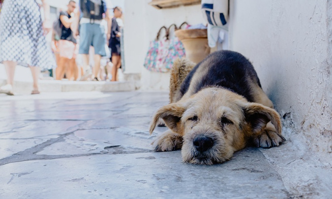 Pétition pour la création d'un refuge pour les chiens et chats de la rue à Lima