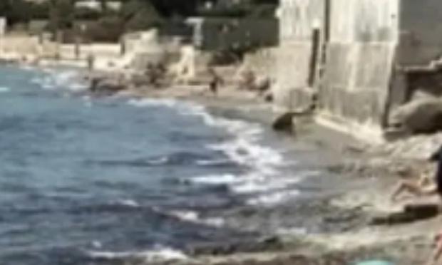 Pétition : Maintien de la plage aux chiens sur le site de fontsainte la ciotat
