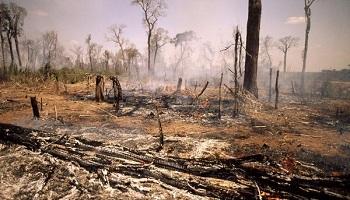Pétition : L'huile de palme, un poison pour la terre !