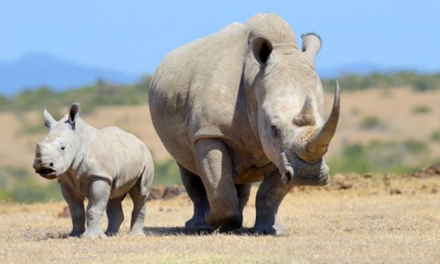 Pétition : On est tous contre le braconnage des rhinocéros !