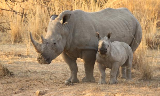Plus de chasse, plus de massacre et plus de maltraitance des animaux
