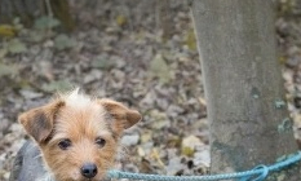Contre l'abandon des animaux de compagnie