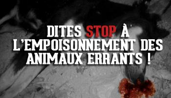 Pétition : Nous vous demandons d'arrêter le massacre des animaux errants !