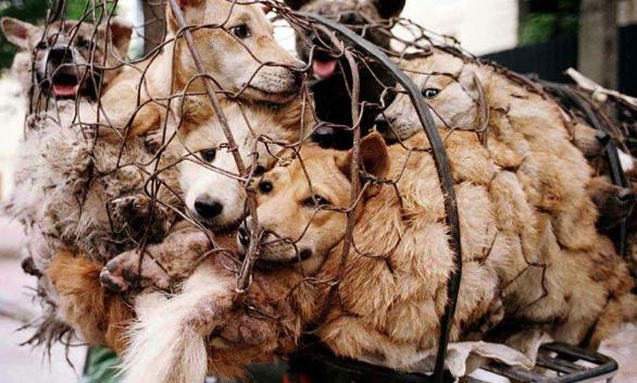 Stop au festival de Yulin !!