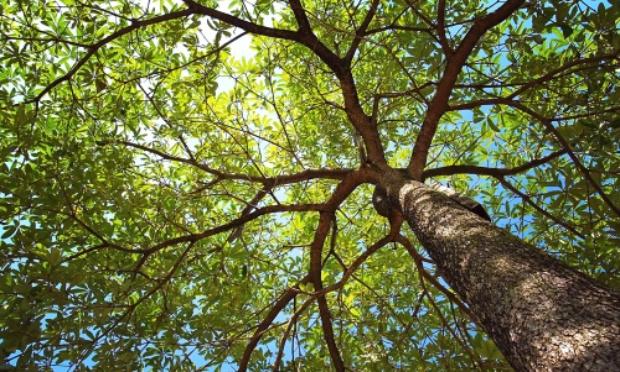 Protégez les grands arbres contre l'abattage abusif à Rennes !