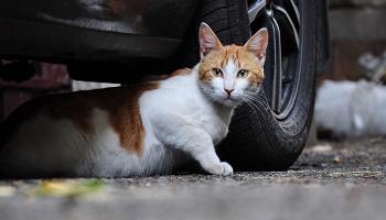 P tition il faut effacer le chat haret errant comme - Loi sur les chats et le voisinage ...