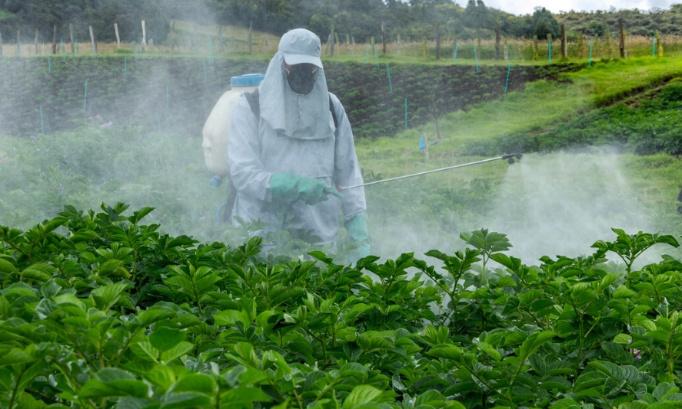 Disparition des insectes due aux pesticides : une nouvelle sonnette d'alarme et toujours aucune action ? Cette fois nous ne laisserons pas passer !