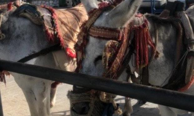 Pétition : Libérez les ânes de cette souffrance !