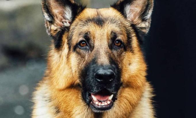 Pétition : Pour l'interdiction des abandons des chiens, chats et chevaux