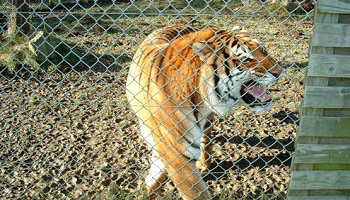 Pétition : Lutte contre l'euthanasie des animaux au zoo du Chaudron !