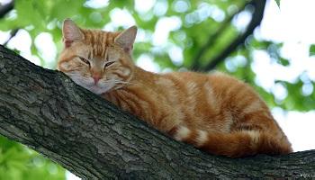 Où est le chat malade Caramel ?