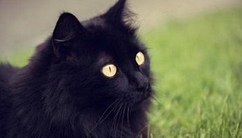 Sanctions des plus sévères pour le serial killer de chats noirs à Marseille