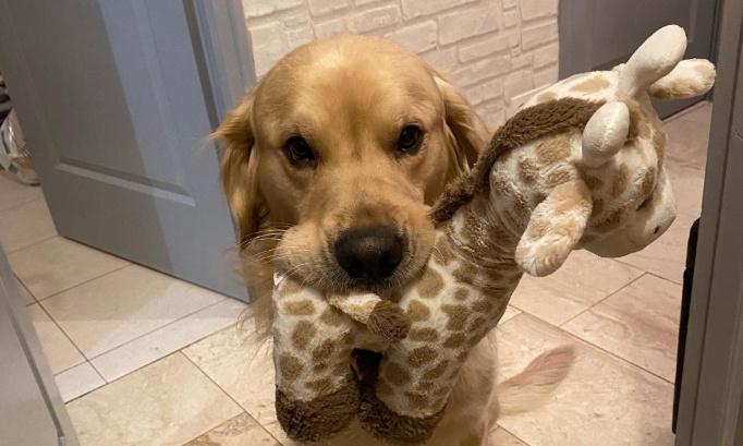 Justice pour mon chien !