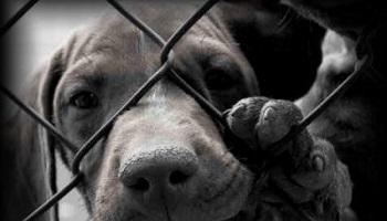 Contre la maltraitance, les fourrures, l'abandon, les abattoirs