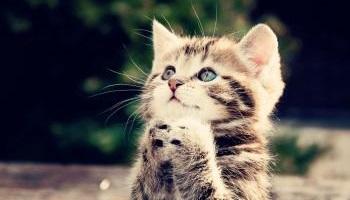 Le chat, un être vivant et non une peluche