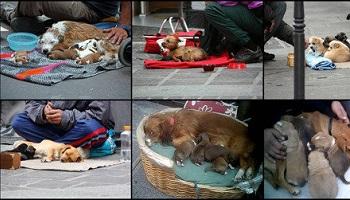 Interdiction de la mendicité avec des animaux sur les trottoirs
