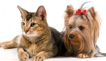 Des lois plus strictes pour la protection animale des chiens et chats domestiques