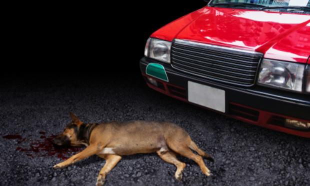Condamnation pour l'automobiliste ayant trainé son chien derrière une remorque à Nantes le 26/07/2021 !