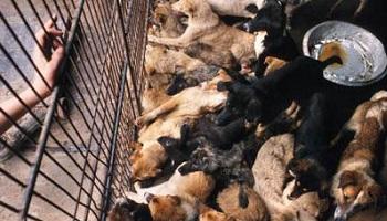 Pétition : Boycott du commerce avec la Corée du Sud jusqu'à fin du martyr des chats et des chiens du pays