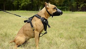 Retrait de l'obligation de la muselière pour les chiens de 2ème catégorie dans les lieux publics