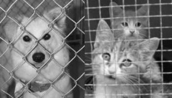 Un suivi après un achat des chiens et chats
