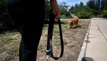 Pétition : Une surveillance soutenue de l'allée des chiens au parc Georges Brassens