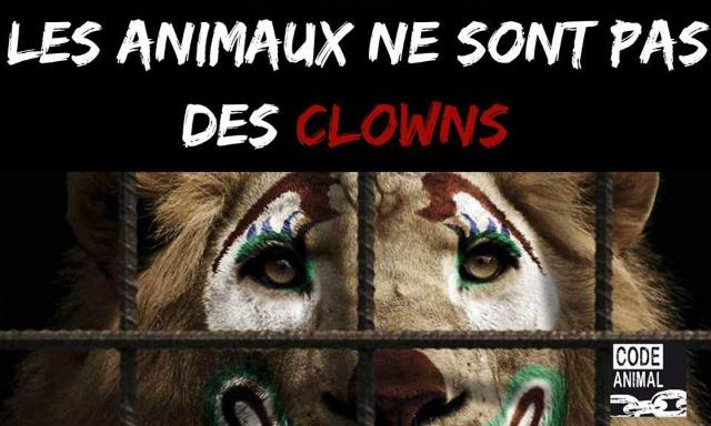 Pour que la Mairie de Vaulx-en-Velin (69) s'engage pour l'interdiction des animaux dans les cirques