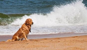 Acceptez les chiens sur les plages