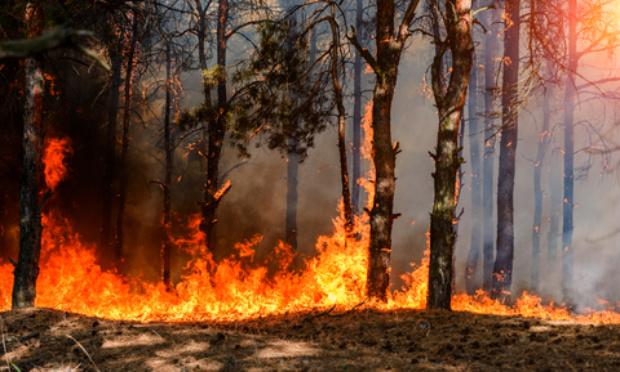 Pour une meilleure lutte contre les feux de forêt