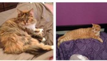 Enquête approfondie sur la disparition de nombreux chats sur la commune de Montady