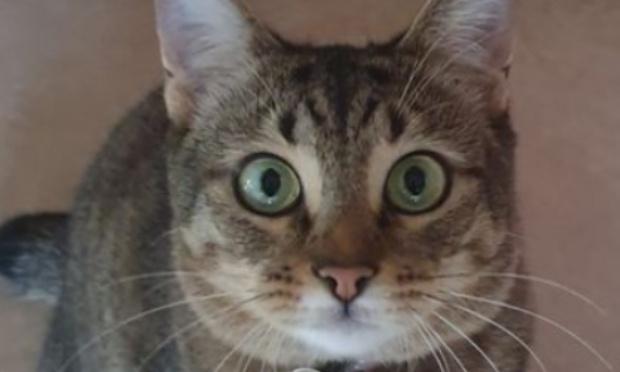 Pour demander à Air France la vérité et la suite des recherches pour la chatte Teddy