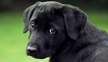 L'arrêt du massacre cruel des chiens, chats et animaux pour la fourrure.