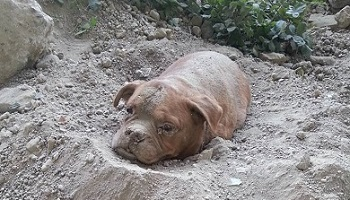Petition : Maximum jail sentence for man who buried dog alive.