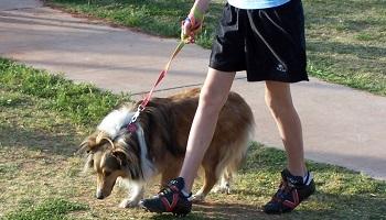 Pétition : Il faut responsabiliser les propriétaires de chiens du lotissement des Pyrénées !