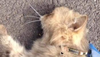 Prendre en considération la maltraitance animale