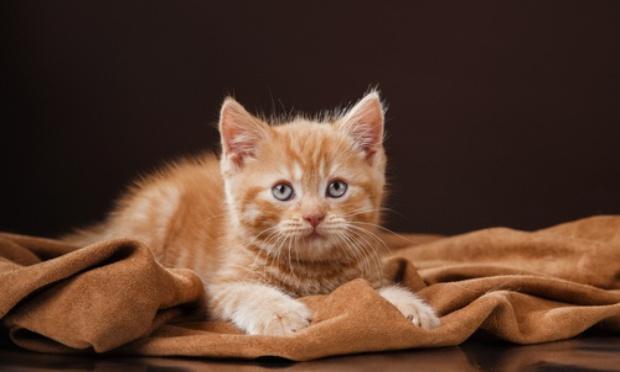 """URGENCE à relocaliser le refuge """"Le chat perché"""""""