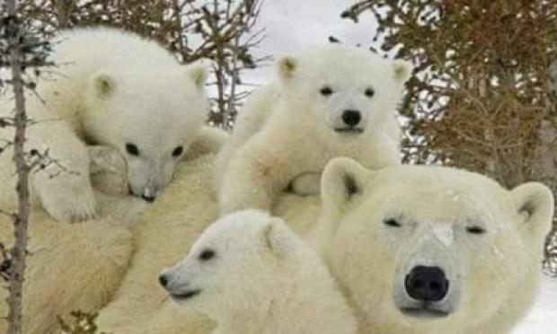 Les animaux disparaissent, il faut les sauver !