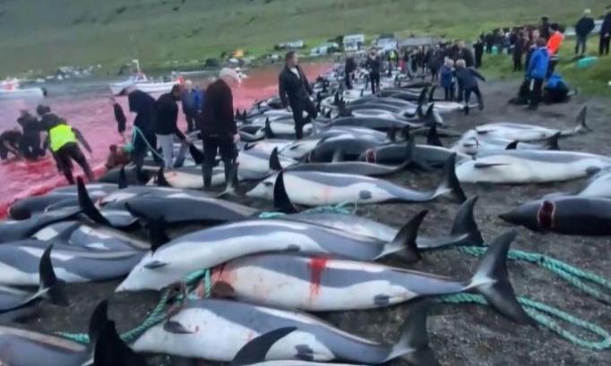 Condamnons les mangeurs de dauphins : Stoppons ce massacre !