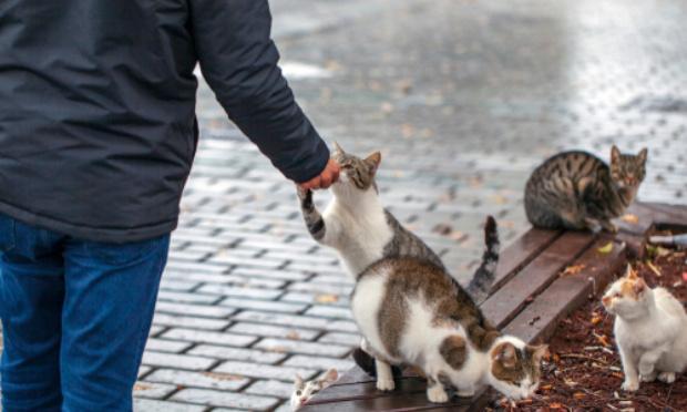 La prolifération des chats en résidence, ce fléau qui touche tout le monde