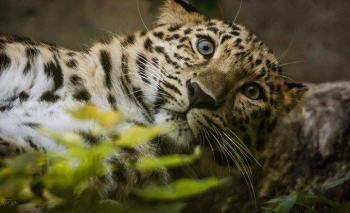 Pour que le Zoo de Mulhouse retire ses aliments pleins d'huile de palme de ses roulottes !