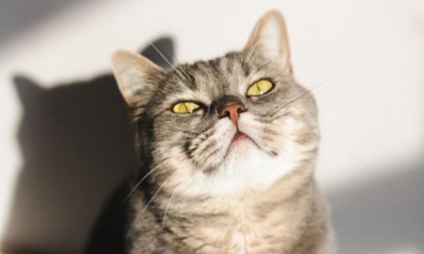 Stop aux journées adoptions des SPA du 65, traumatisantes pour les chatons et qui défavorisent les chats du Béarn.