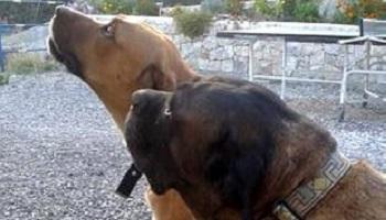 Pétition : Trouvons l'auteur de l'empoisonnement cruel de Pépita et Jaguar