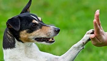 Non aux éleveurs canin ou félin, que ce ne soit plus un métier !