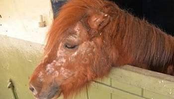 Traitez ces chevaux avec humanité