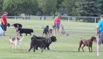 Pétition : Parc à chiens