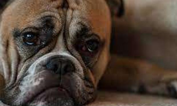 Narcos : sauvez mon chien de l'euthanasie