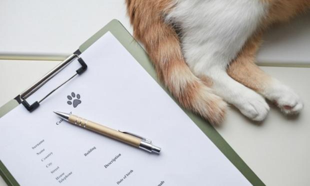 Pour lutter contre les abandons : Identifier toute personne avec un animal